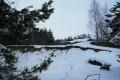 Paprotnia zimą